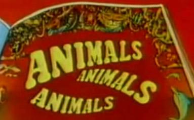 animals animal animals