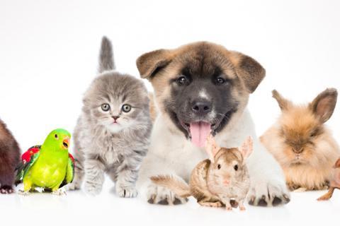 mascotas mas habituales