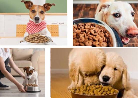 alimentos perros raza